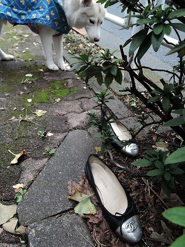 散歩屋日誌【28】_c0062832_15572501.jpg