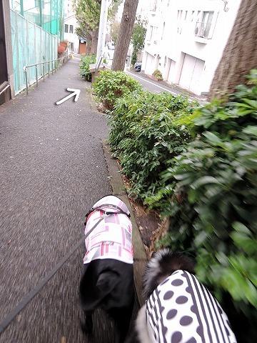 散歩屋日誌【28】_c0062832_15572510.jpg