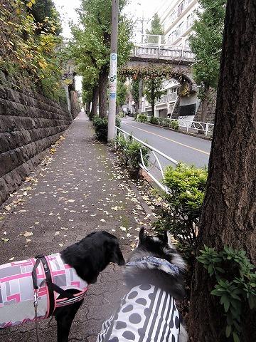 散歩屋日誌【28】_c0062832_15572557.jpg