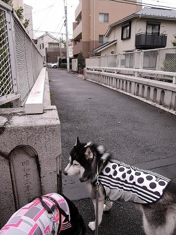 散歩屋日誌【28】_c0062832_15590691.jpg