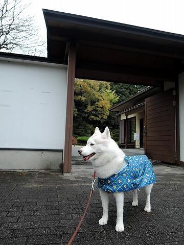 散歩屋日誌【28】_c0062832_16003539.jpg