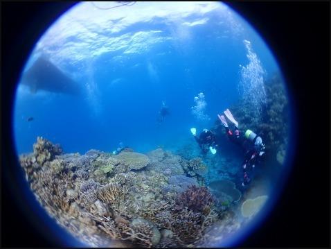 12月28日今年最後の水納島ダイビング_c0070933_23120095.jpg