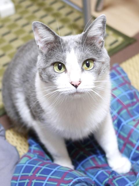 猫のお留守番 赤福くん編。_a0143140_22435088.jpg