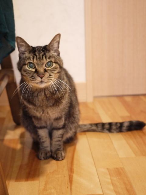 猫のお留守番 リーくん編。_a0143140_22472212.jpg