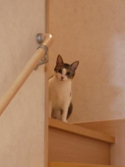 猫のお留守番 ゆずちゃん編。_a0143140_22500474.jpg