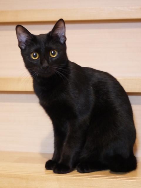猫のお留守番 チョコちゃん編。_a0143140_23125068.jpg
