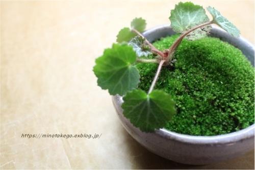 身の丈の優しい苔盆栽_e0343145_23242439.jpg