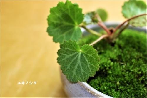 身の丈の優しい苔盆栽_e0343145_23243656.jpg