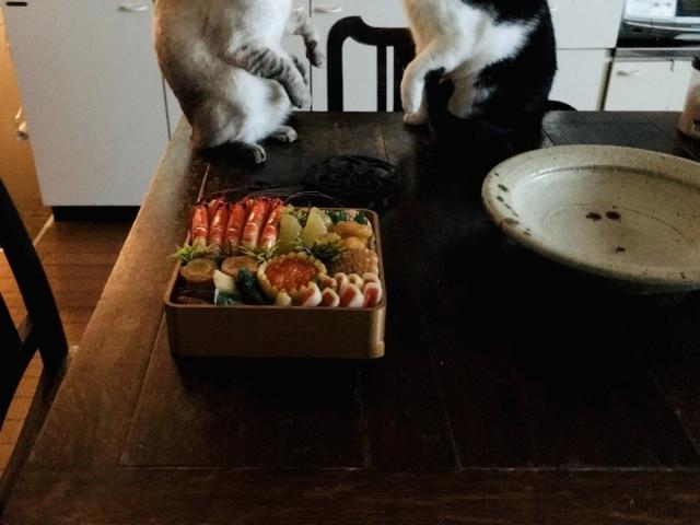 猫にガン無視されるお節_d0101846_17411004.jpeg