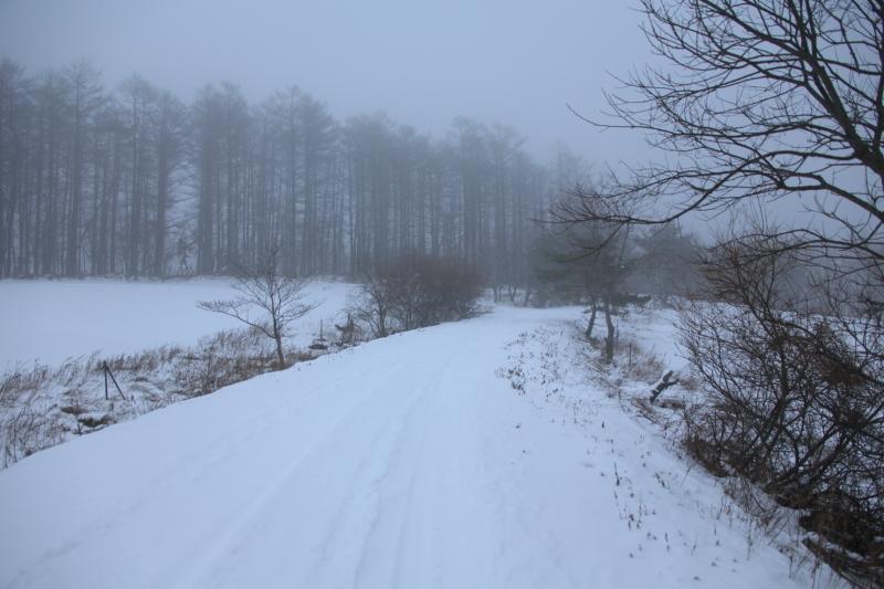 山の道路状況を見に行ってみた(耳切山の場合)_f0075075_15004009.jpg