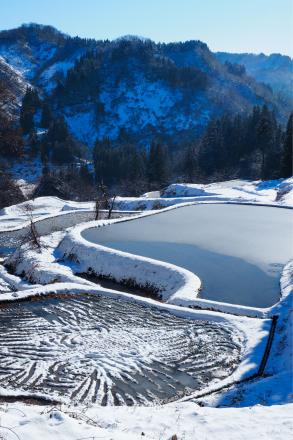 初冬の棚田_a0025576_10522515.jpg
