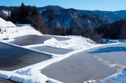 初冬の棚田_a0025576_10522867.jpg