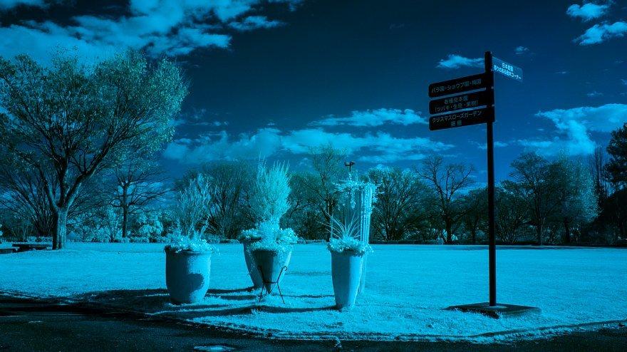 テディベアは見た・・・赤外線の発狂系世界_d0353489_20224196.jpg