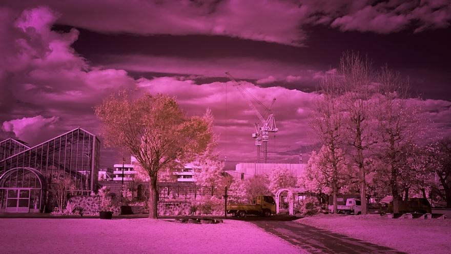 テディベアは見た・・・赤外線の発狂系世界_d0353489_20225889.jpg