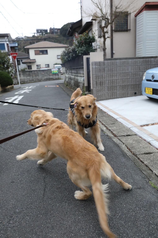 ムギちゃんとナイトくん♪_b0275998_10372258.jpg