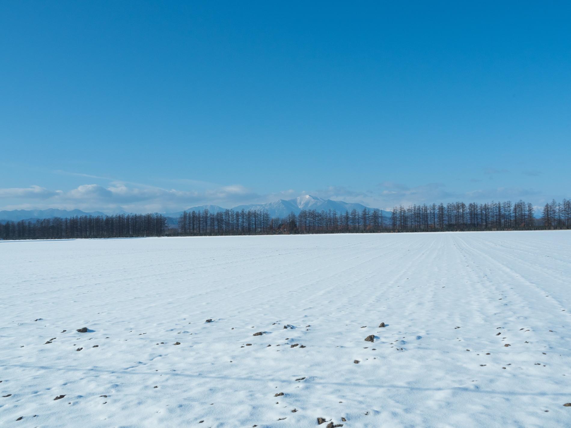 師走の中札内村の農村風景・・今年はちょっと雪が少ない?_f0276498_13534181.jpg
