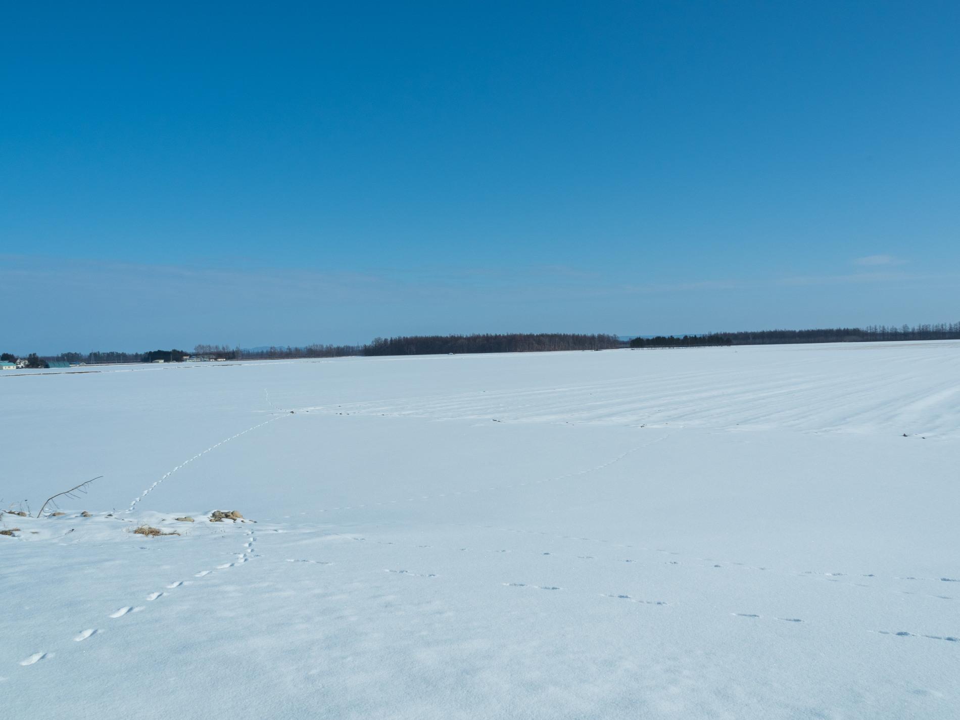 師走の中札内村の農村風景・・今年はちょっと雪が少ない?_f0276498_13540160.jpg