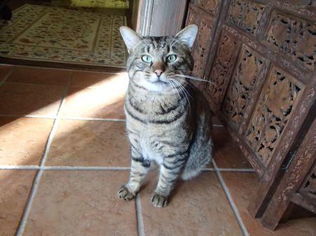 山猫がちょっと家猫顔に_f0064906_12004544.jpg