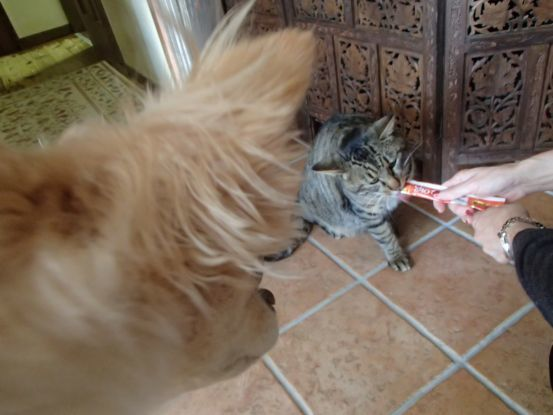 山猫がちょっと家猫顔に_f0064906_12005514.jpg
