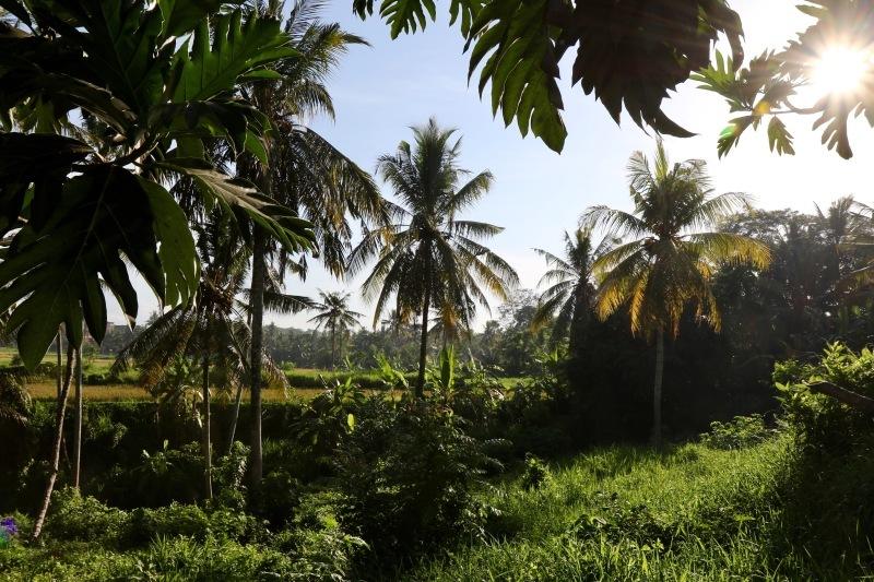 BPM : Bali 2019_d0010432_19523677.jpg
