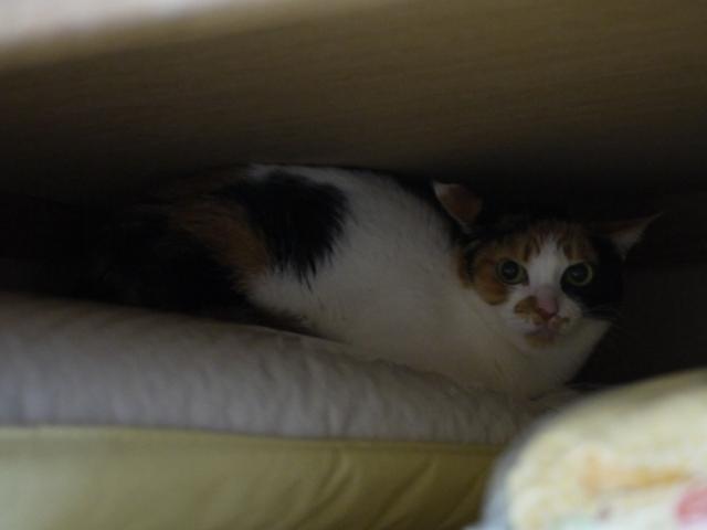猫のお留守番 四季ちゃん編。_a0143140_22360790.jpg