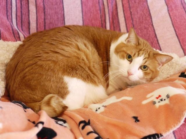 猫のお留守番 あずきくん編。_a0143140_22453439.jpg