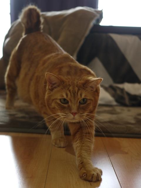 猫のお留守番 きなこくん編。_a0143140_22475318.jpg