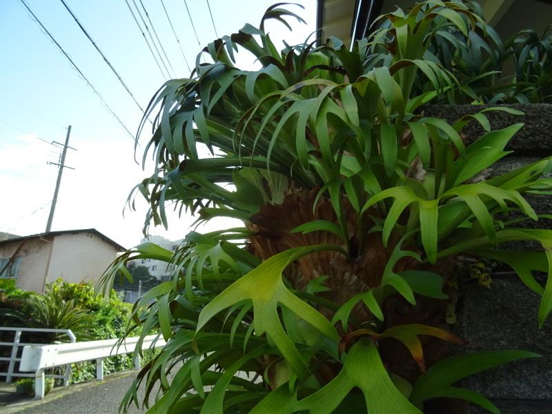 我が家の花壇のリニューアル完了_c0108460_15481485.jpg