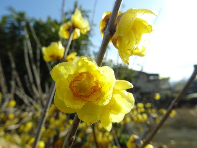 我が家の花壇のリニューアル完了_c0108460_15501706.jpg