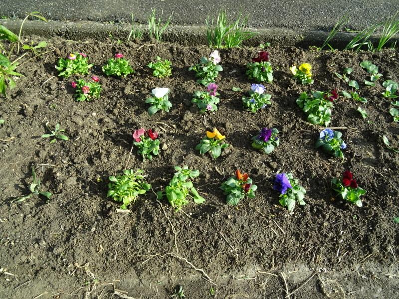 我が家の花壇のリニューアル完了_c0108460_15522581.jpg
