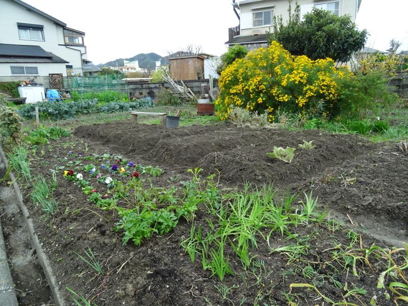 我が家の花壇のリニューアル完了_c0108460_15522673.jpg