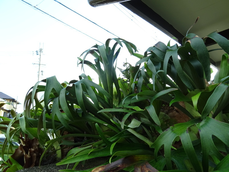 我が家の花壇のリニューアル完了_c0108460_15535668.jpg