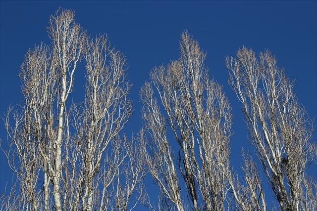 真冬のポー川の風景です_d0047461_14094304.jpg