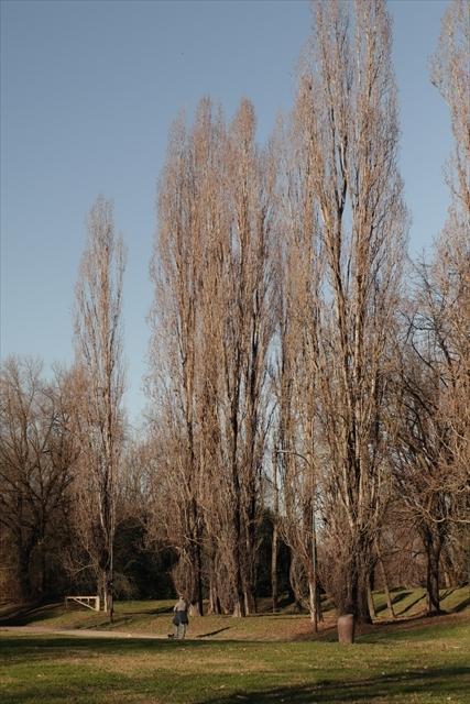 真冬のポー川の風景です_d0047461_14121800.jpg