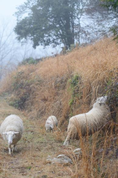 羊と共に_d0231263_00072453.jpg