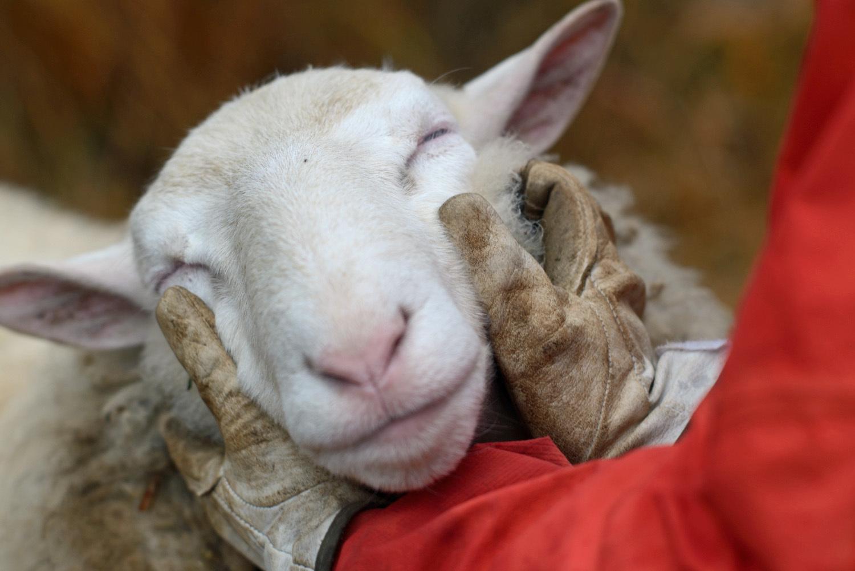 羊と共に_d0231263_00072972.jpg