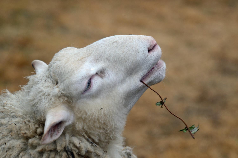 羊と共に_d0231263_00073566.jpg