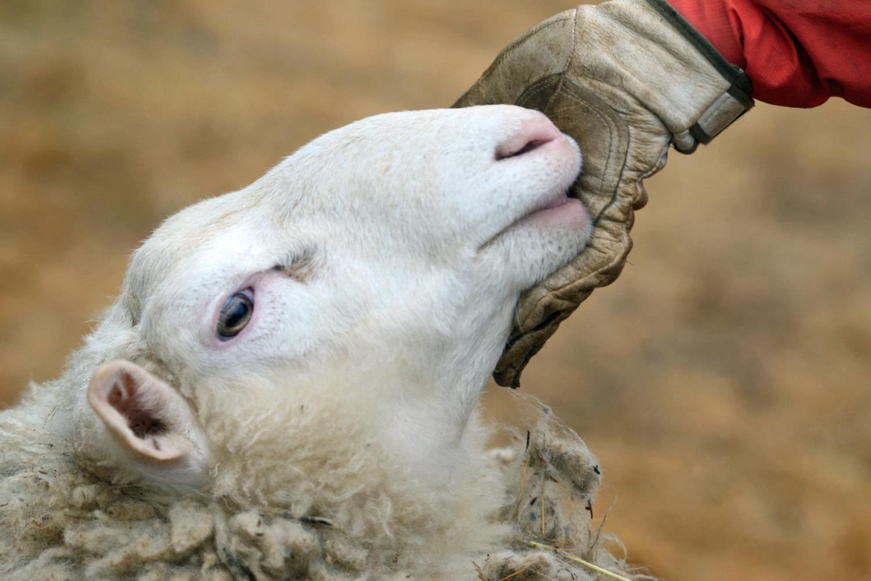 羊と共に_d0231263_00073993.jpg