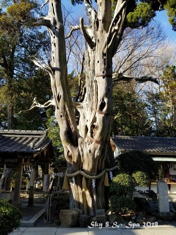 ◆ 30年ぶりの伊豆長岡温泉へ、その14 伊豆の国 最古の宮 「白濱神社」へ(2019年12月)_d0316868_04501523.jpg
