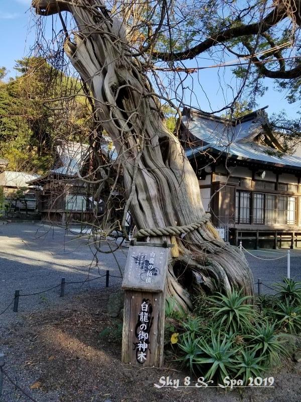 ◆ 30年ぶりの伊豆長岡温泉へ、その14 伊豆の国 最古の宮 「白濱神社」へ(2019年12月)_d0316868_05033560.jpg