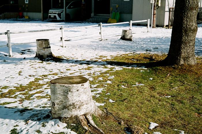 とうとう雪のない越年です_c0182775_17323468.jpg