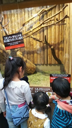 神戸どうぶつ王国でハシビロコウに会った!_d0043390_21574732.jpg