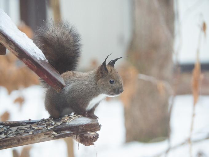 大晦日、季節外れの雨でエゾリス君の耳毛が凍ってる?_f0276498_17374729.jpg