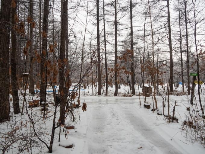 大晦日、季節外れの雨でエゾリス君の耳毛が凍ってる?_f0276498_17380951.jpg