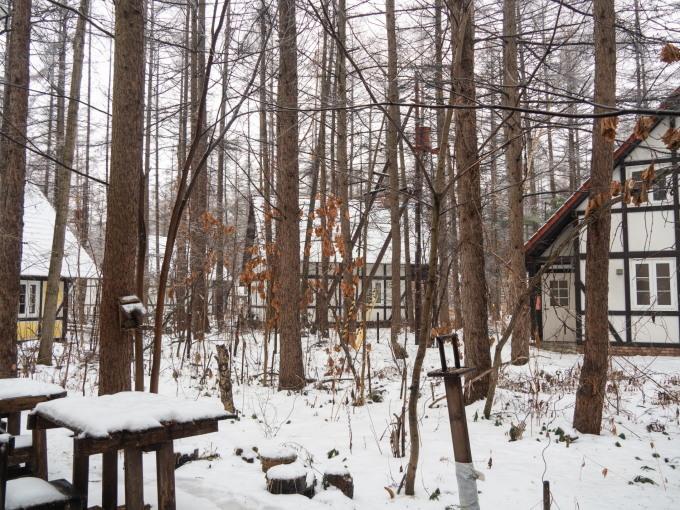 大晦日、季節外れの雨でエゾリス君の耳毛が凍ってる?_f0276498_17382802.jpg