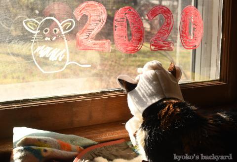 ねずみのかぶりもので、新年のご挨拶(Whitney編)_b0253205_04510822.jpg