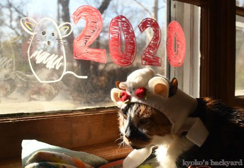 ねずみのかぶりもので、新年のご挨拶(Whitney編)_b0253205_04512480.jpg