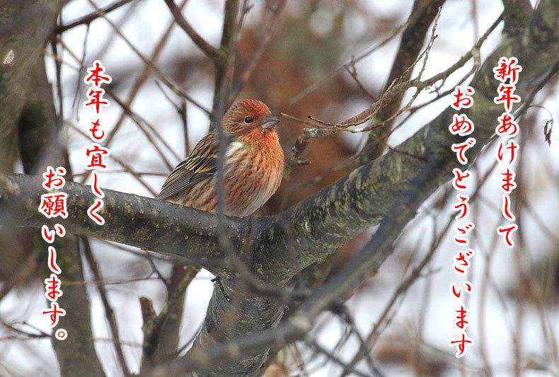 謹賀新年_e0218518_00464777.jpg