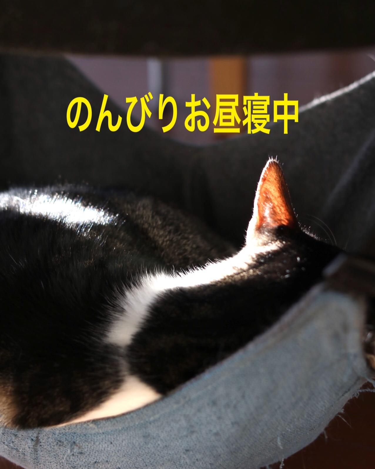 にゃんこ劇場「兄弟げんか」_c0366722_15573427.jpeg