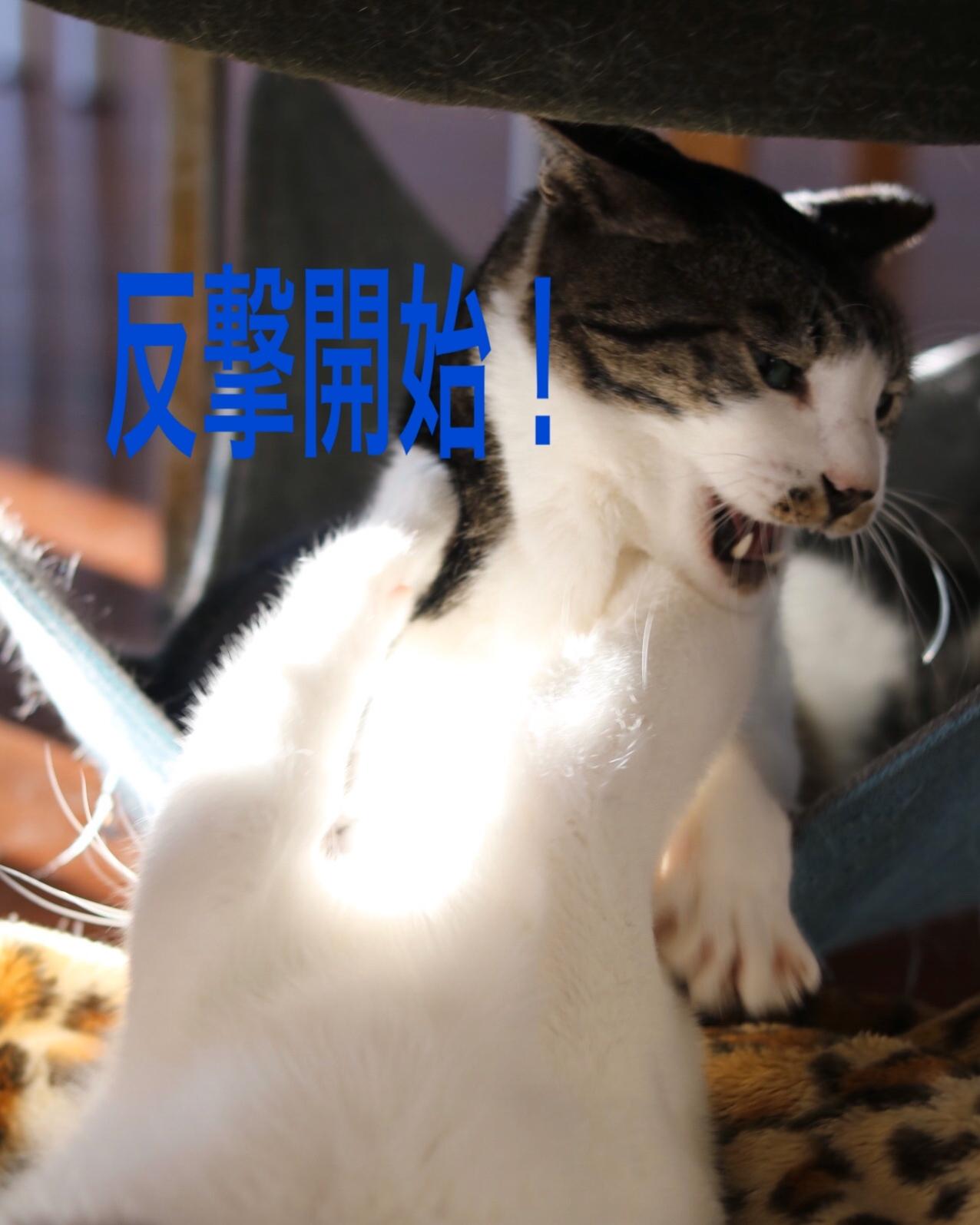 にゃんこ劇場「兄弟げんか」_c0366722_15590146.jpeg